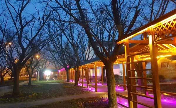 【泰兴】古银杏公园洗墙灯亮化